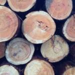 木の住まい支援協会全国連合会