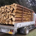 国産木材の利用拡大へ