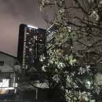 東京を東京らしく楽しむ