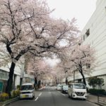 新年度桜の季節